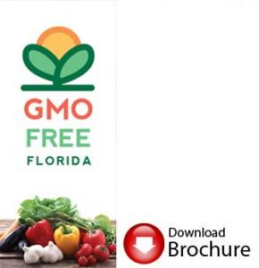GMObrochure1