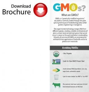 GMObrochure2
