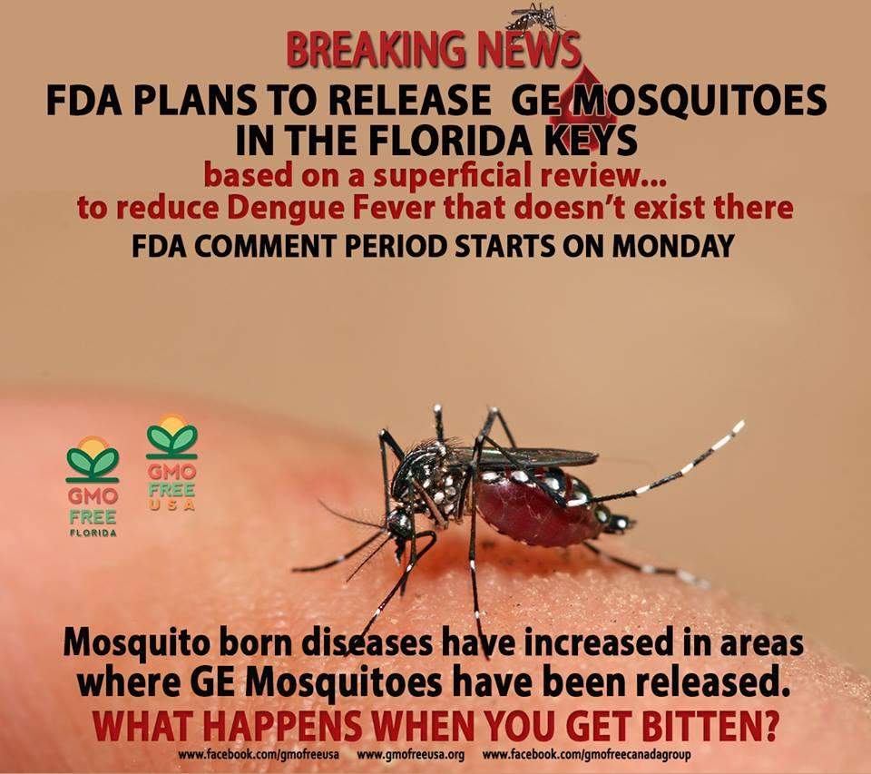 FDA-Plans